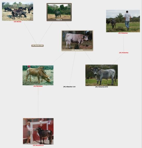 Généalogie des sementales de l'élevage Turquay