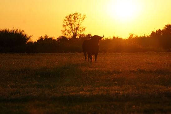Le soleil se couche sur la Bélugue
