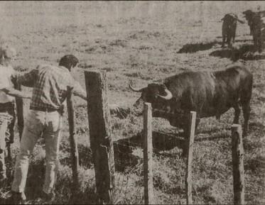El semental Gonzalito-42 y el ganadero. (Fuente : La provence)