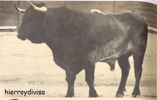 Cubanosito, Negro zaino, de Antonio Ordonez, indultado en 1965 en Jerez.