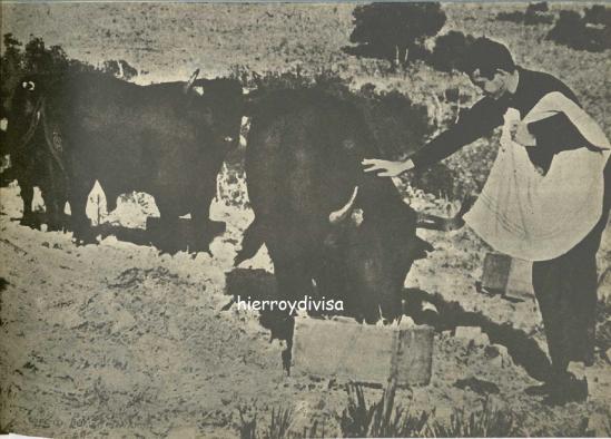Antonio Ordoñez y sus toros.