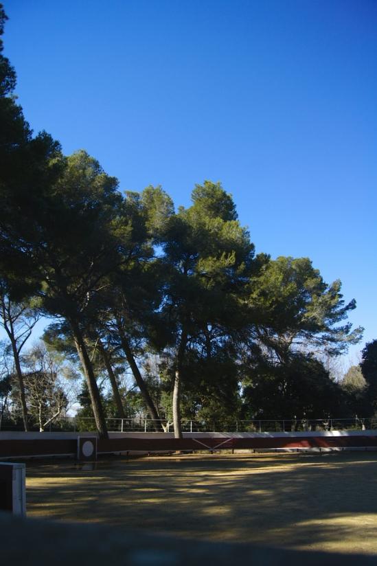 La plaza de tienta del Vieux Sulauze.
