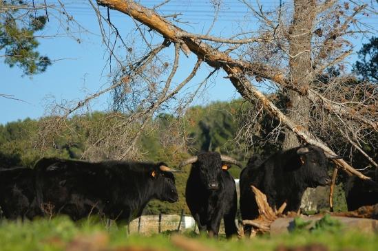 Erales de la ganadería