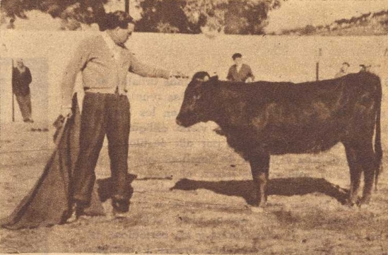 Antonio Sanchez de Sepulveda, padre de Inigo Sanchez Urbina, actual representante de la ganaderia : ademas de torear en el campo, tal y como se puede comprobar en la fotografia, fue el artifice del éxito de la época mas reciente y mas conocida de Sepulveda. Fotografia de El Ruedo