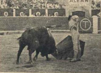 Paquirri, en Albacete el 12 de septiembre de 1970. El toro de Sepulveda humilla de forma extraordinaria en su muleta. Fotografia El Ruedo.