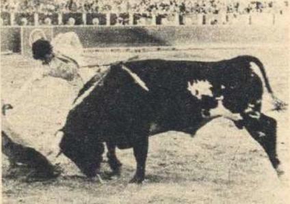 Importante derechazo realizado por Damaso Gonzalez el día de su exultan triunfo en Albacete, el 12 de septiembre de 1970. Fotografía El Ruedo