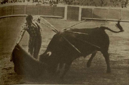Bravio-11, toreado por Pepin Martin Vazquez en Barcelona el 10 de abril de 1949. Fue echado a las vacas durante cuatro temporadas antes de lidiarse con seis años en Barcelona. Era hijo del famoso Presidente. Dio excelentes resultados y un magnifico juego el día de su lidia en Barcelona.