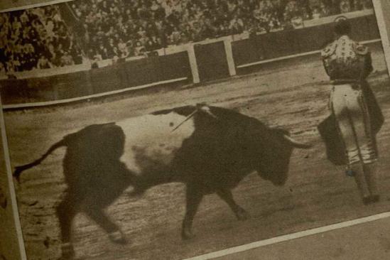 Bichero-49, toreado en Barcelona el 10 de abril de 1949 por Antonio Caro. Fue un excelente ejemplar, hijo de .... Fotografia de El Ruedo.
