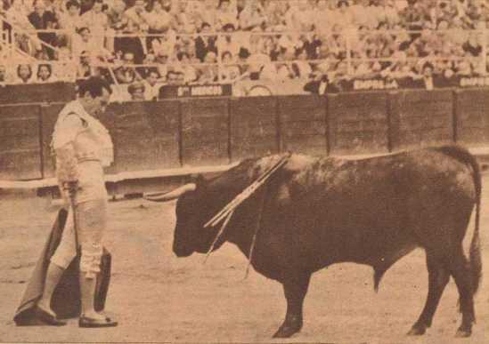 Luis Miguel Dominguin, frente a un bajisimo y entregado ejemplar de Sepulveda durante la colosal tarde que firmó en Barcelona el 29 de Junio de 1959. Fotografia El Ruedo