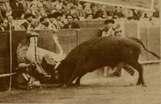 Un bravisimo ejemplar de Sepulveda lidiado el 4 de mayo de 1950 en Barcelona. Fotografia El Ruedo