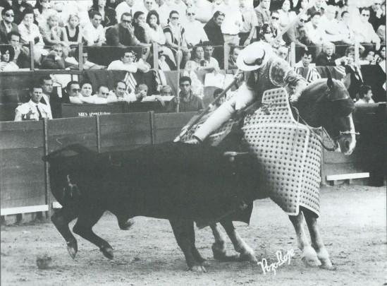 Danzarin, de Sepulveda, empujando con fijeza bajo el peto, en la corrida concurso de Jerez de la Frontera celebrada el 19 de mayo de 1990. Fotografia publicada en Courrier de Ceret.