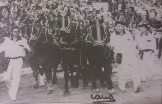 Vuelta al ruedo del excelente toro Esquiador-4, toreado por Jesulin de Ubrique en 1994 en Zaragoza. Fotografia Cano.