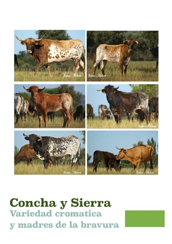 vacas de concha y sierra